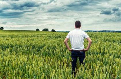 asigurari agricultura Radauti